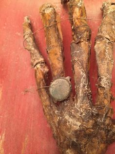 GRUESOME AND AUTHENTIC HAND, TREASURE MAP AND COINS FOUND HIDDEN AWAY IN GRANDPAS ATTIC.