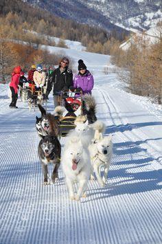 Slitta di cani #Queyras #inverno