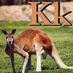 k is for kangaroo k is for kangaroo preschool theme pinterest kangaroos animal alphabet and preschool themes