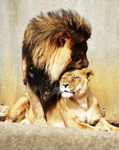 #Lions