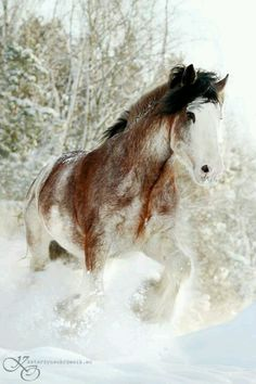 I will... Rescue a Clydesdale/Draft Horse.*