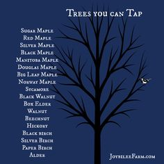 If you like maple syrup you can also tap these....