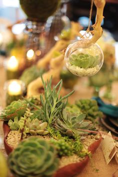 Floral: Cut flowers are not green. Considering centerpieces such as terrariums! These are living, breathing eco-system contained in a glass jar. As a grouping on a table they make a glamorously green center piece AND a wonderful keepsake for guests. For your bridal bouquet, add succulents. The stems of succulents are actually root systems. After your wedding, you can take the succulents and plant them. The succulent will thrive and you will be able to keep a living memento of your wedding…