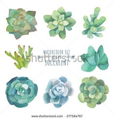 Vector set of floral elements in a watercolor style. Succulents painted in watercolor. Elements for design of invitations, movie posters, fabrics and other objects. Set #3