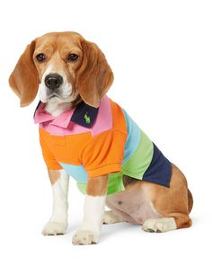 5e2a3abe8 12 Dog Clothing Brands That ll Have Your Pup Winning Best Dressed. Dog  Coats And SweatersDog JacketDog ShirtRalph Lauren