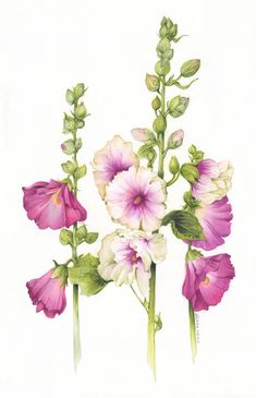 Just a Bunch of Flowers by ArielRGH.deviantart.com on @DeviantArt