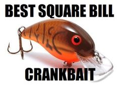 What is the best square bill crankbait? It is impossible to narrow it down to just one so I can up with the top 5 square bill crankbaits for bass. Best Bass Fishing Lures, Bass Lures, Bass Fishing Tips, Saltwater Fishing, Kayak Fishing, Fishing Tackle, Fishing Stuff, Pesca Spinning, Fishing Techniques