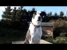 Dogs Trust Leeds: Angus. Awesome vid! Poor handsome Angus is a collie cross looking for love