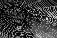 Scientists have found a way to increase the overall strength and durability of spider silk. After feeding a spider a small amount of graphene and carbon nanotubes, the creature produced webs that were five times stronger than normal. Spiders In Australia, Spider Silk, Spider Webs, Spider Spray, Free Spider, Holistic Treatment, Water Beads, Matrix, Seo Tips
