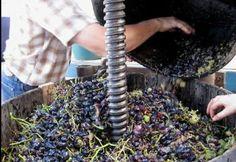 Tarn. Les secrets de la route des vins dans le Gaillacois