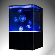 10 gallon Eon Jellyfish Tank - buy now at www.moonjellyfish.com