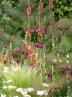 rich burnished red spikes of Verbascum 'Firedance' mingle with bronze fennel, Stipa tenuissima and cirsiums