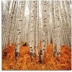★I ♥ birch
