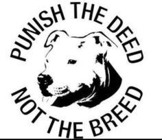 pit bull politics