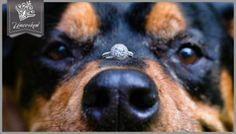 Dog and Engagement Ring © 2013 Uncorked Studios, LLC - Destination & Philadelphia Pennsylvania Wedding Photographer