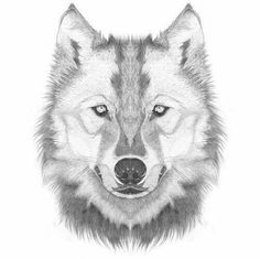 How to draw a wolf head / step by step lesson - click pic for video! Wolf Face Drawing, Wolf Face Tattoo, Animal Drawings, Art Drawings, Wolf Drawings, Drawing Animals, Wolf Sketch, Realistic Drawings, Art Tutorials