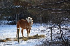 Equine / Horse Photography in Minnesota :: JAEquinePhotography.wordpress.com. #horses #photography #farms