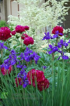 Lovely early summer planting with deep colour saturation.