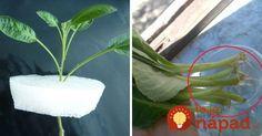 Z jednej rastlinky 10 nových za 2 týždne: Naučte sa geniálny zlepšovák, ako rozmnožovať rastliny z odrezkov! Growing Plants, Garden Inspiration, Indoor Plants, Flora, Succulents, Herbs, Gardening, Green, Cactus