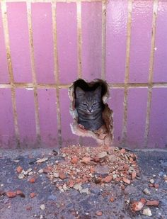 found in a cat shaped hole in the wall :)