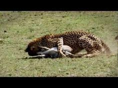 Against All Odds - King Drum - Lion N Cheetah - YouTube
