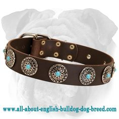 Handmade #English #Bulldog Wide #Leather #Collar $34.90 | www.all-about-english-bulldog-dog-breed.com