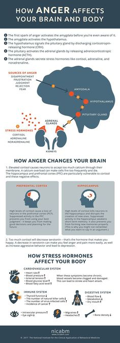 How Anger Affects the Brain and Body [Infographic]