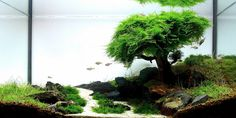Amano creates through bespoke aquariums amazing beautiful scenes from nature, miniature natural landscapes, being an award-winning aquarist and designer.