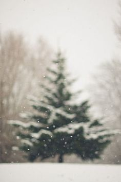 Christmas tree winter iphone wallpaper