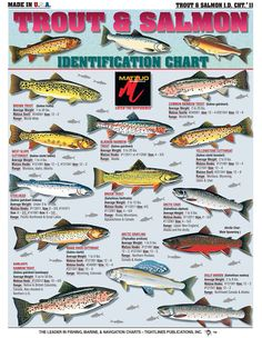 How to Identify Freshwater species Shad Perch Walleye Bluegill Crappie Trout and Bass - The Best Charts For Freshwater Fishing Identification Knot Tying and Catching Fish Carp Fishing, Trout Fishing, Fishing Tips, Fishing Lures, Fishing Knots, Fishing Stuff, Fish Chart, Brown Trout, Fishing Techniques