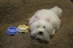 Needle felted dog /miniature dog felt / West by RozalkaFeltAndWool