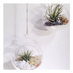 Bright little hanging globe airplant terrariums. Find them here www.theskygardens.etsy.com