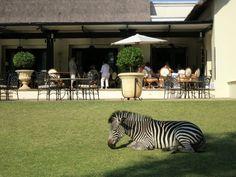 @honey bee bee Trek at @Tongabezi Lodge Victoria Falls Lodge Victoria Falls Safari Lodge, Zambia