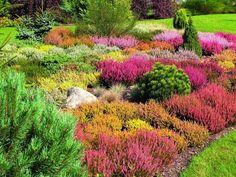 Wrzosowisko - zakładanie i wybór roślin
