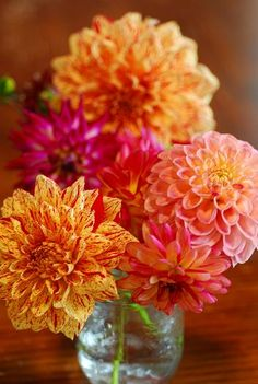 I just love dahlias. My favorite flower!  Too bad the bulbs have to be pulled.