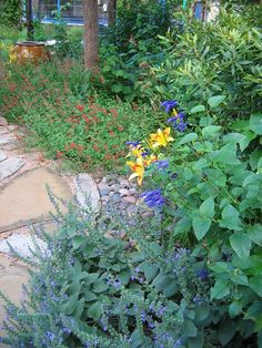 Ideas for front shade bed: heartleaf skullcap in the foreground.  Texas betony is the red along the path.