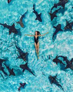 Most Popular Honeymoon Beach Ideas ★ honeymoon beach bahamas beaches n resorts Nurse Shark, Summer Vibe, Destination Voyage, Beautiful Places To Travel, Romantic Travel, Travel Aesthetic, Dream Vacations, Adventure Travel, Adventure Holiday