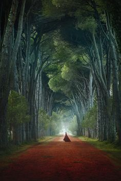Welcome to Tunnel Di Pini, the most epic tree tunnel in the world!  Pisa, Tuscany, Italy by Victoria and Terrence Fantasy Photography, Fine Art Photography, Travel Photography, Conceptual Photography, Amazing Photography, Landscape Photography, Portrait Photography, Fantasy Magic, Tree Tunnel