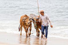 Macau, Portuguese Culture, Global Village, Visit Portugal, Camel, Boat, Gado, Regional, Fishing