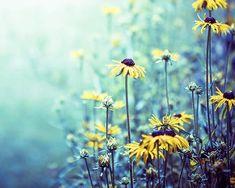 botanical canvas art flower photography canvas by mylittlepixels