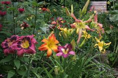Farm bed - daylily buddies. Turtle Rock, Day Lilies, Gardens, Bed, Plants, Image, Stream Bed, Planters, Beds