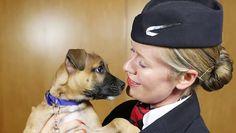 British Airways will screen pet-centric in-flight entertainment to keep passengers calm