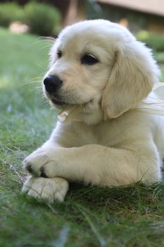 Cute Puppies And Kittens, Cute Baby Dogs, Super Cute Puppies, Cute Little Puppies, Cute Little Animals, Baby Animals Pictures, Cute Puppy Pictures, Funny Animals, Dogs And Kids
