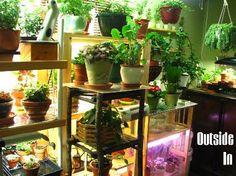 Indoor Greenhouse - Growing Indoor Plants