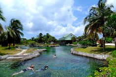Snorkeling at the Turtle Farm Grand Cayman