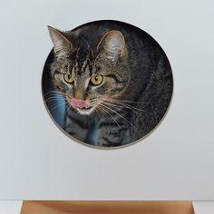 kot, kocur, kitek, kici, kotek, koteł, fotografia koty, fotografia kotów, fotografia zwierząt