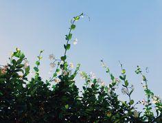 Honeysuckle Fruit, Floral, Plants, Flowers, Plant, Flower, Planets
