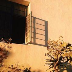 Imagem de photography, flowers, and vintage