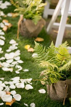 Ferns! Double as wedding favors?Garden Wedding at Medicine Creek Winery - photos by Jessica Hill Photography | junebugweddings.com