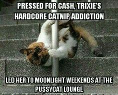 Funny images of the day (43 pics) Trixie's Hardcore Catnip Addiction